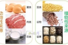 哪类蛋白质轻易被吸取何应用? 身分剖析