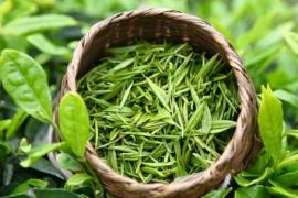 绿茶是最天然的减肥饮品